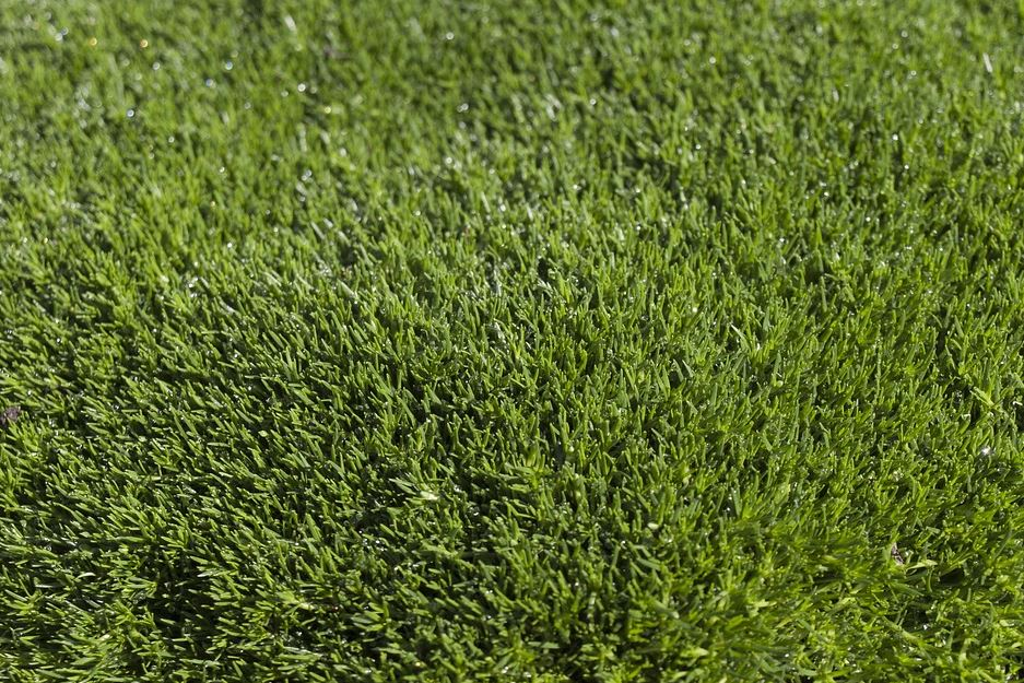 Precio del c sped artificial sevilla solucont - Precio del cesped artificial ...